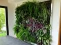 Mur vegetal - Montfort